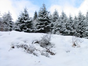neige-montreal[1]